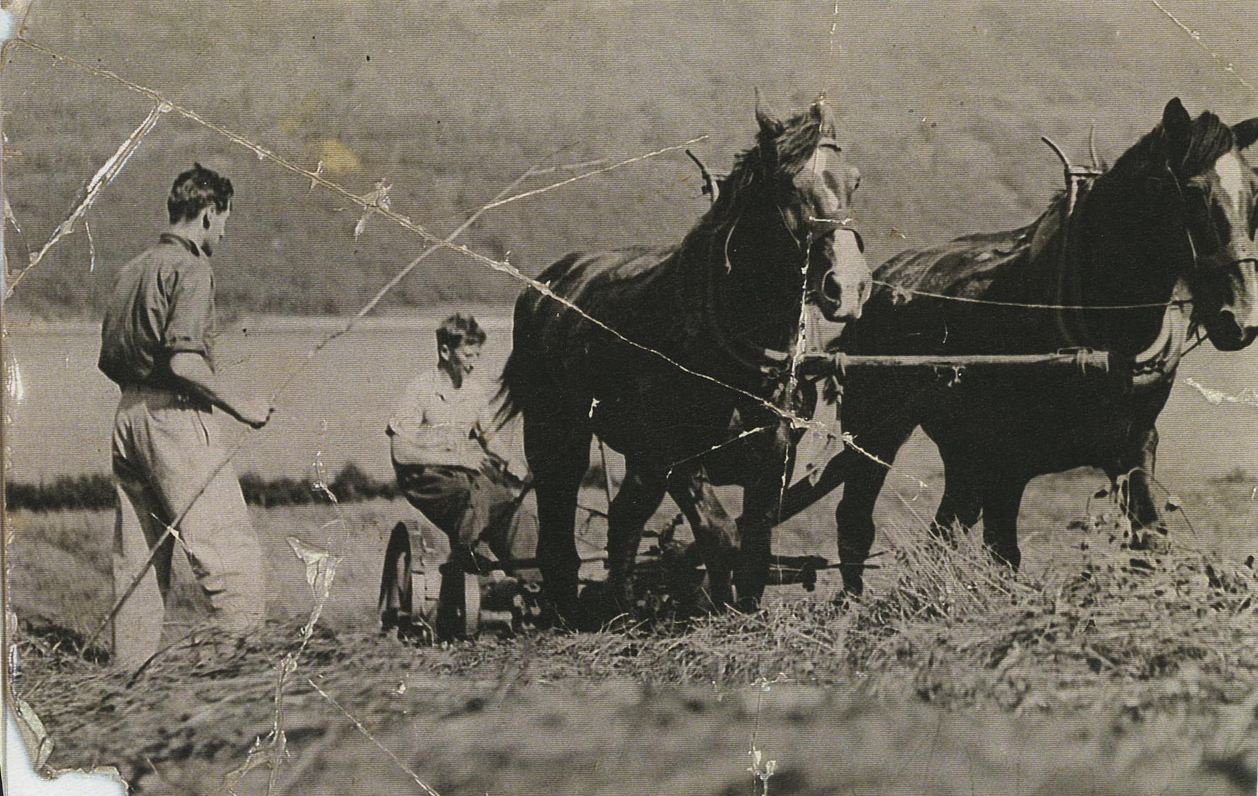 Hay Cutting at Ardno